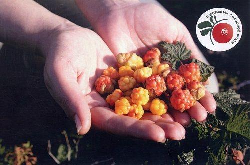 В субботу в Норильске в четвёртый раз пройдёт фестиваль Северной ягоды. На этот раз – онлайн