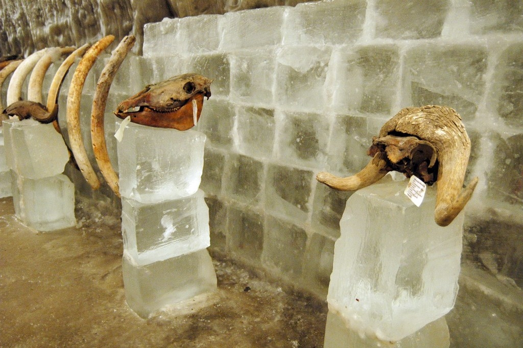 В Красноярске планируется открыть музейный комплекс вечной мерзлоты и мамонта международного уровня