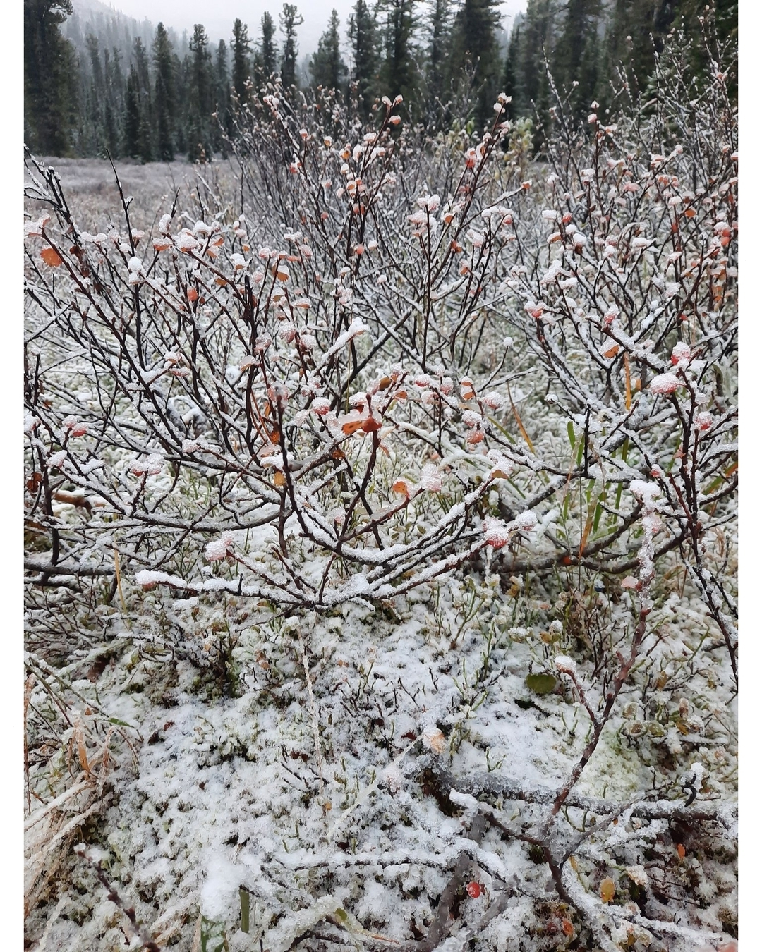 Снег кружится…