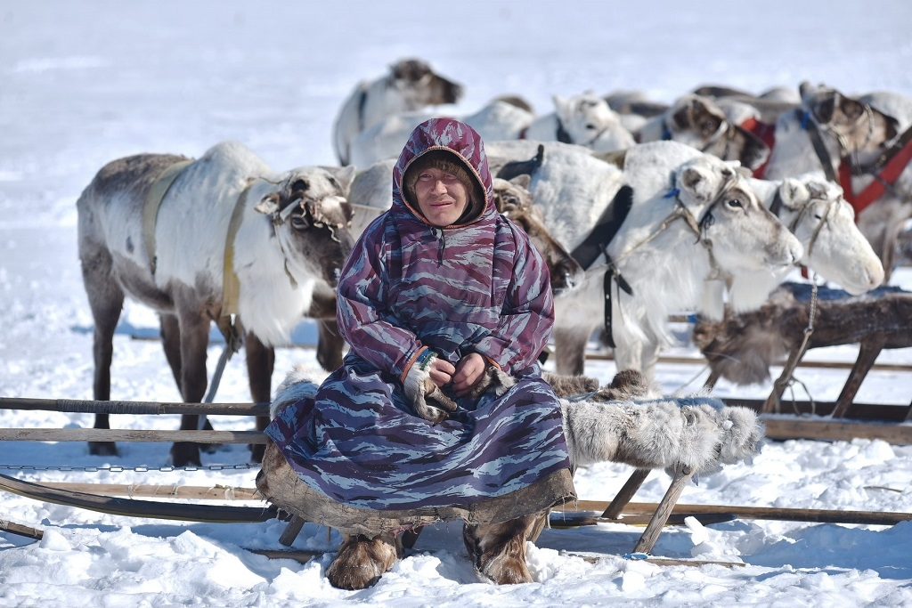 Новая льгота для кочевников тундры