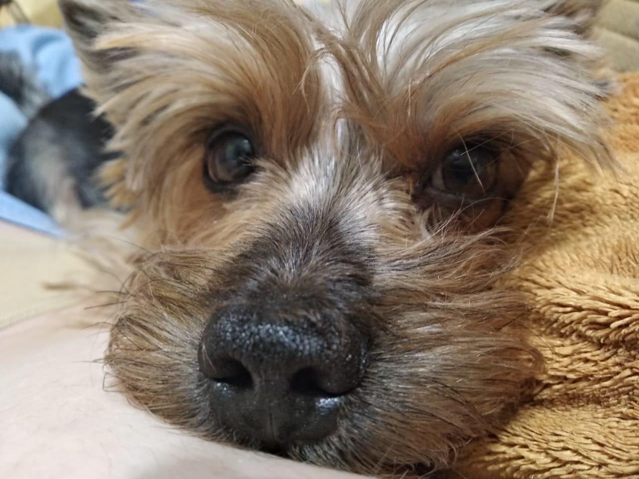 За мошенничество при продаже несуществующего породистого щенка норильчанку отправили работать на благо общества