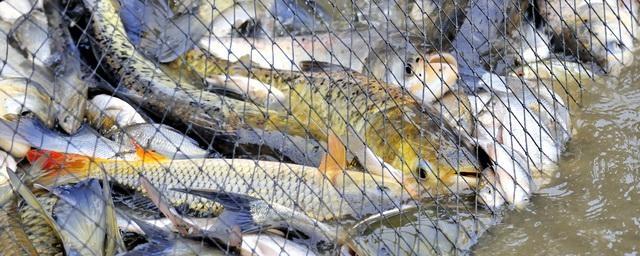 С сегодняшнего дня вступают в силу новые правила рыболовства