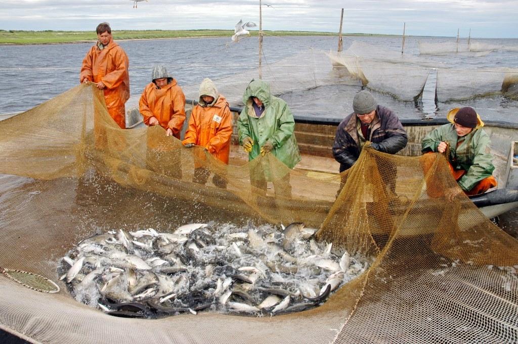 У кого больше рыба? На Таймыре традиционные Дни рыбака в этом году начнутся 3 июля в посёлке Левинские Пески