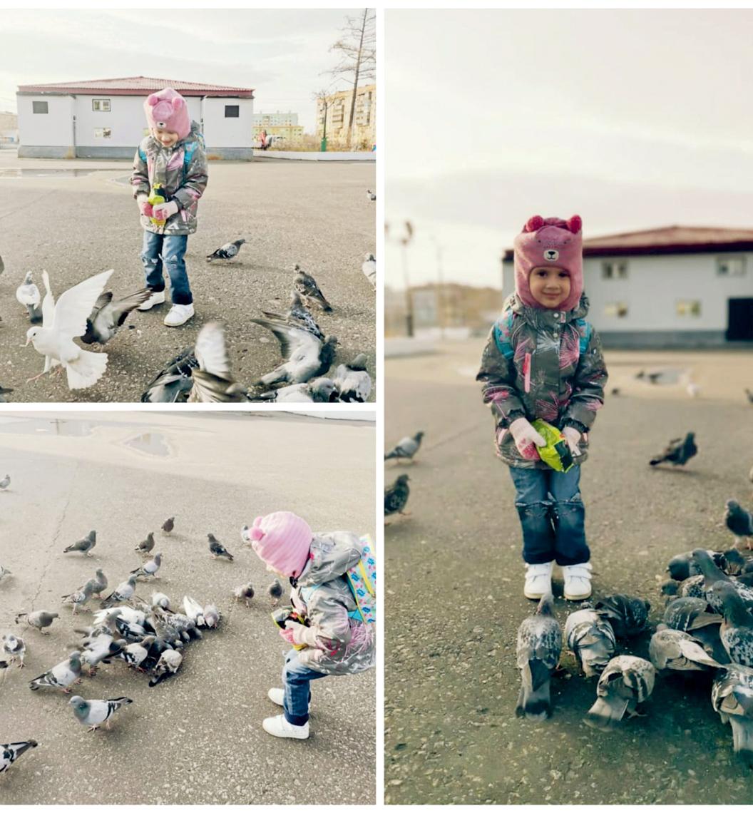 На птичьем дворе