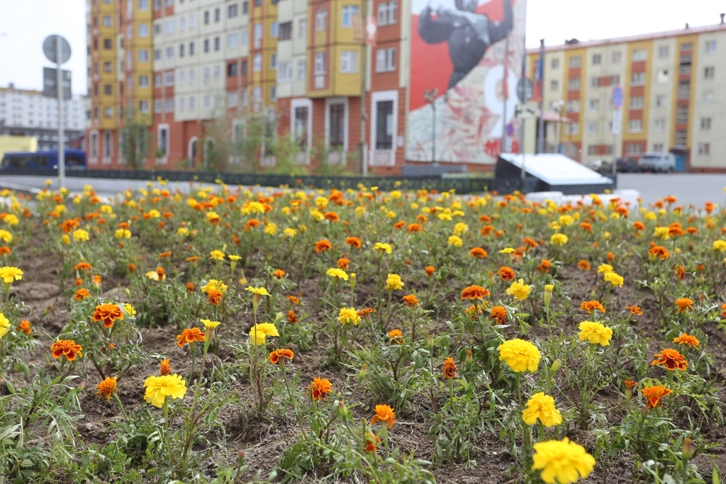 Перед законом ответят те, кто срывает цветы на городских клумбах и газонах