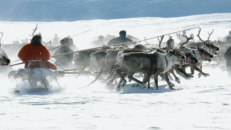 «Норникель» запустил грантовый конкурс «Мир Таймыра» для поддержки коренных народов Таймыра