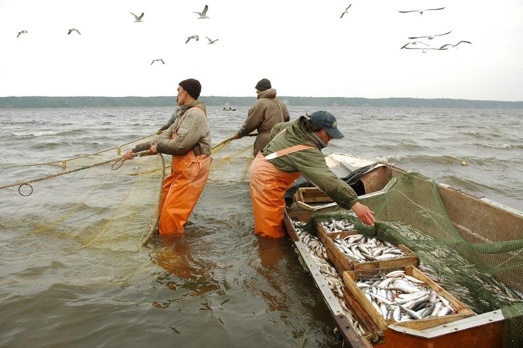 Рыбий мех. В Мурманске начат экспериментальный выпуск изделий из кожи некоторых видов рыб, обитающих в Баренцевом море