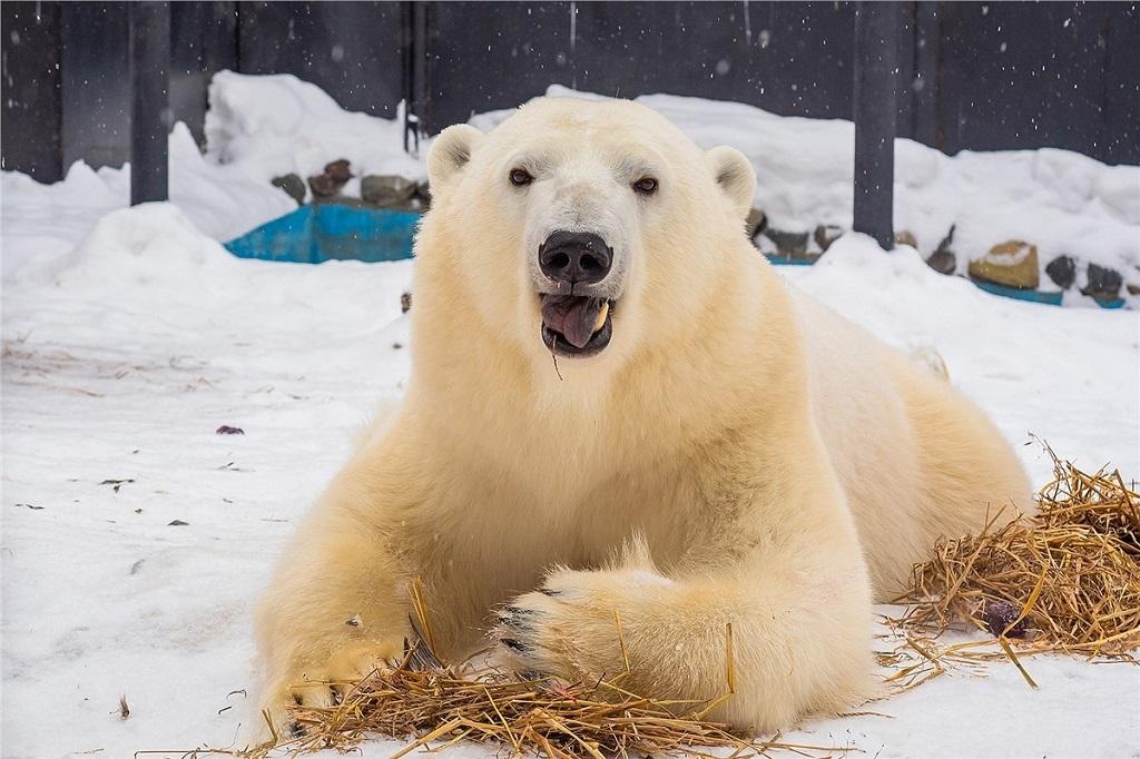 Красноярский зоопарк «Роев ручей» участвует во Всероссийском конкурсе «Надёжный партнёр — Экология»