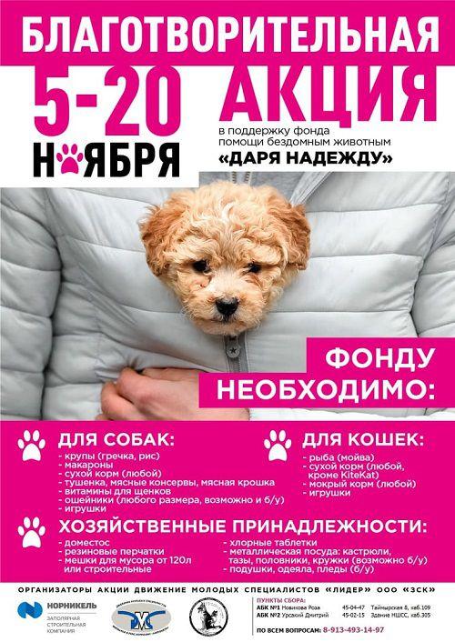 Активисты ЗСК проводят акцию в поддержку благотворительного фонда помощи бездомным животным «Даря надежду»