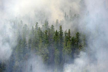 За прошедшие сутки в крае ликвидировано 11 лесных пожаров.