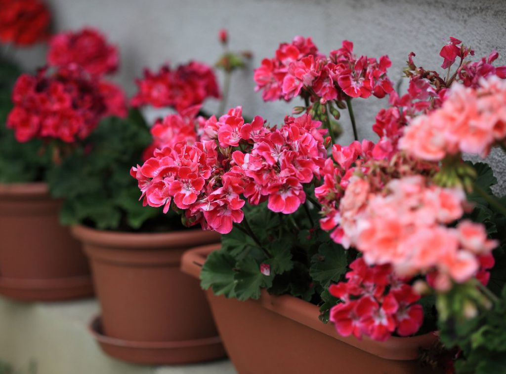 В «Нескучном саду» школы № 1 растут, несмотря на полярную ночь, почти 400 видов растений.