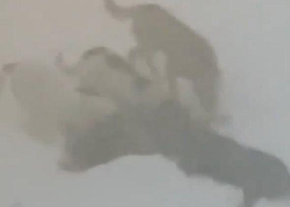 Вчера в Кайеркане стая бродячих собак растерзала своего сородича. Меры по предотвращению подобных ситуаций принимаются.
