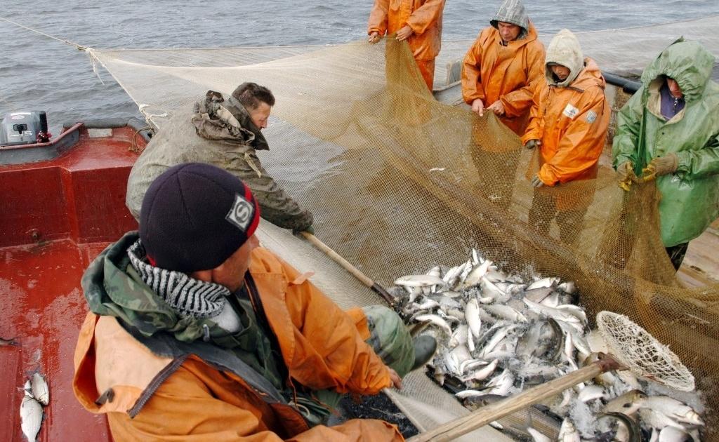 Таймыру увеличили объёмы добычи водных биоресурсов