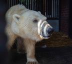 Там, где живут медведи