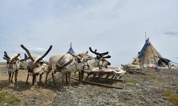Проект «Священная нарта» Союза хранителей этнокультурных традиций Таймыра получил президентский грант